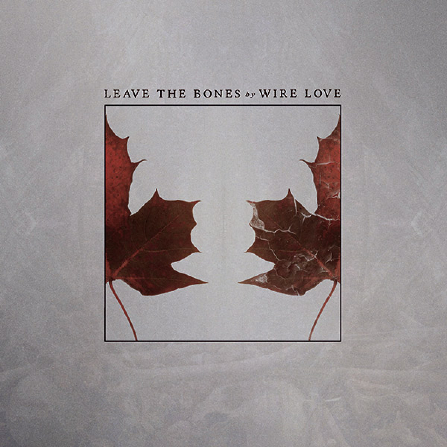 REVIEW: Wire Love – 'Leave the Bones'